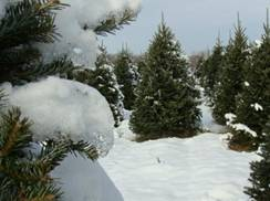 Image for Whispering Pines Tree Farm